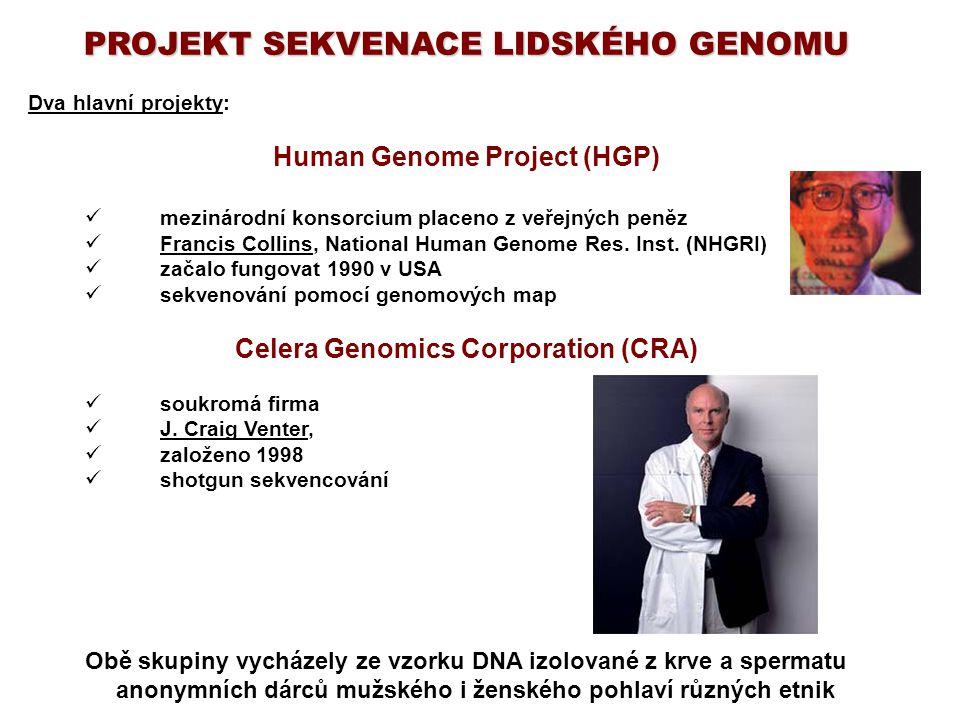 PROJEKT SEKVENACE LIDSKÉHO GENOMU Dva hlavní projekty: Human Genome Project (HGP) mezinárodní konsorcium placeno z veřejných peněz Francis Collins, Na