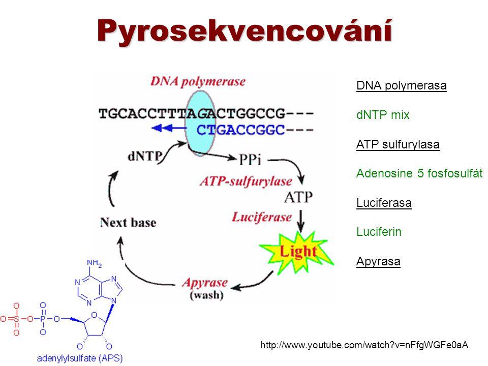 Pyrosekvencování DNA polymerasa dNTP mix ATP sulfurylasa Adenosine 5 fosfosulfát Luciferasa Luciferin Apyrasa http://www.youtube.com/watch?v=nFfgWGFe0
