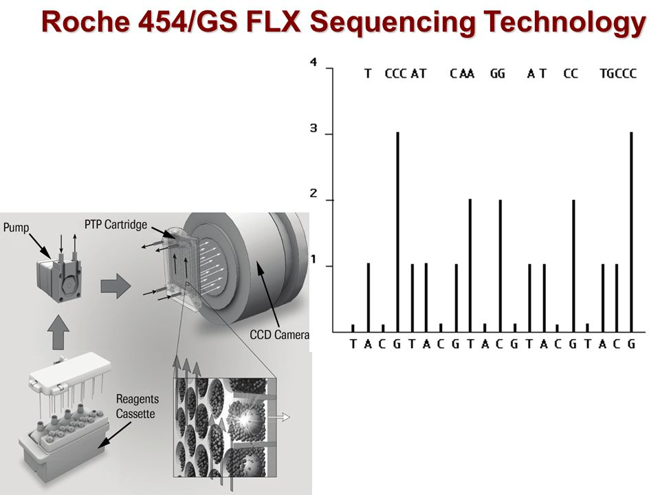 Roche 454/GS FLX Sequencing Technology