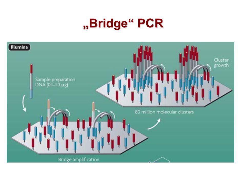 """""""Bridge"""" PCR"""