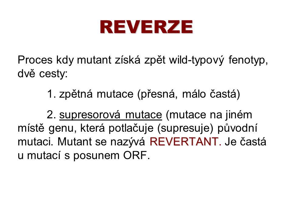REVERZE Proces kdy mutant získá zpět wild-typový fenotyp, dvě cesty: 1. zpětná mutace (přesná, málo častá) REVERTANT 2. supresorová mutace (mutace na