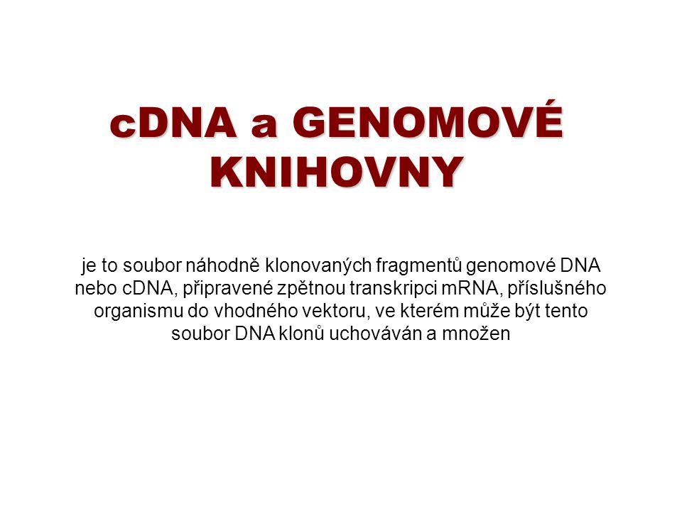 cDNA a GENOMOVÉ KNIHOVNY je to soubor náhodně klonovaných fragmentů genomové DNA nebo cDNA, připravené zpětnou transkripci mRNA, příslušného organismu