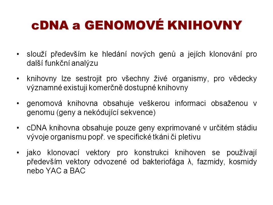 cDNA a GENOMOVÉ KNIHOVNY slouží především ke hledání nových genů a jejích klonování pro další funkční analýzu knihovny lze sestrojit pro všechny živé