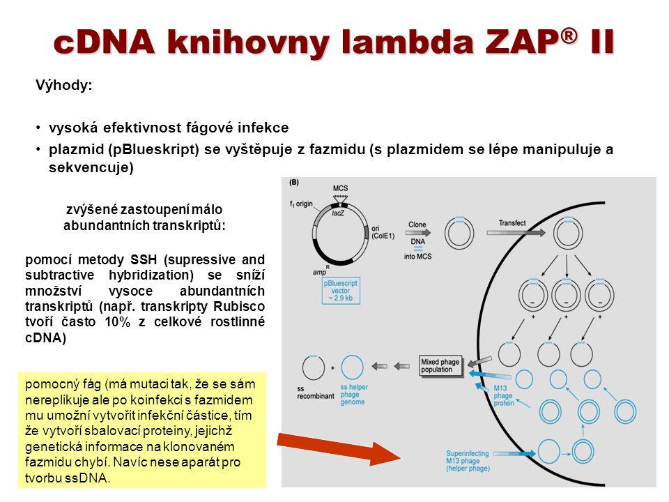 cDNA knihovny lambda ZAP ® II Výhody: vysoká efektivnost fágové infekce plazmid (pBlueskript) se vyštěpuje z fazmidu (s plazmidem se lépe manipuluje a