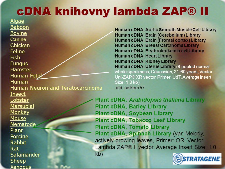 cDNA knihovny lambda ZAP® II Algae Baboon Bovine Canine Chicken Feline Fish Fungus Hamster Human Fetal Human Human Neuron and Teratocarcinoma Insect L