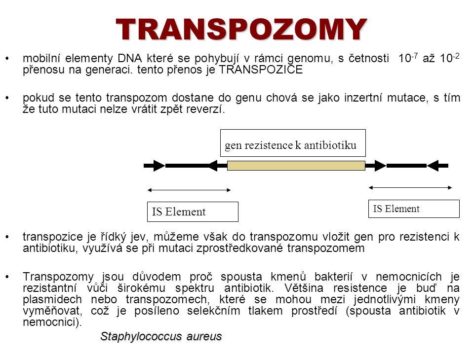 TRANSPOZOMY mobilní elementy DNA které se pohybují v rámci genomu, s četnosti 10 -7 až 10 -2 přenosu na generaci. tento přenos je TRANSPOZICE pokud se