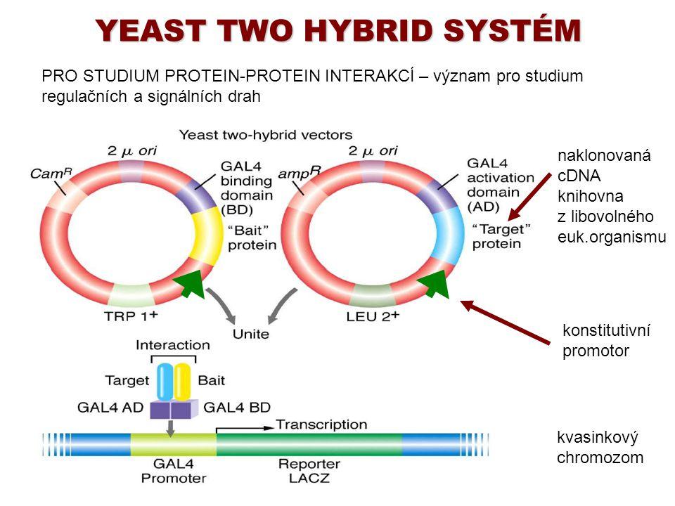YEAST TWO HYBRID SYSTÉM PRO STUDIUM PROTEIN-PROTEIN INTERAKCÍ – význam pro studium regulačních a signálních drah naklonovaná cDNA knihovna z libovolné