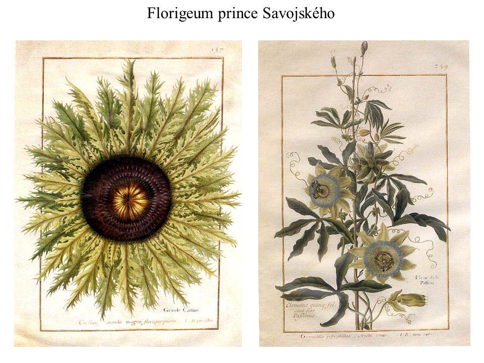 Florigeum prince Savojského