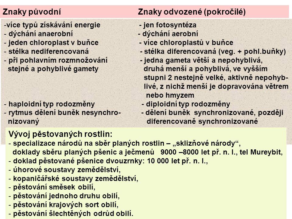 Znaky původní Znaky odvozené (pokročilé) -více typů získávání energie - jen fotosyntéza - dýchání anaerobní - dýchání aerobní - jeden chloroplast v bu