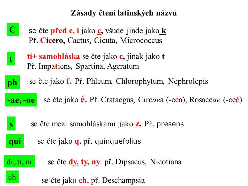 Zásady čtení latinských názvů C se čte před e, i jako c, všude jinde jako k Př. Cicero, Cactus, Cicuta, Micrococcus t ti+ samohláska se čte jako c, ji