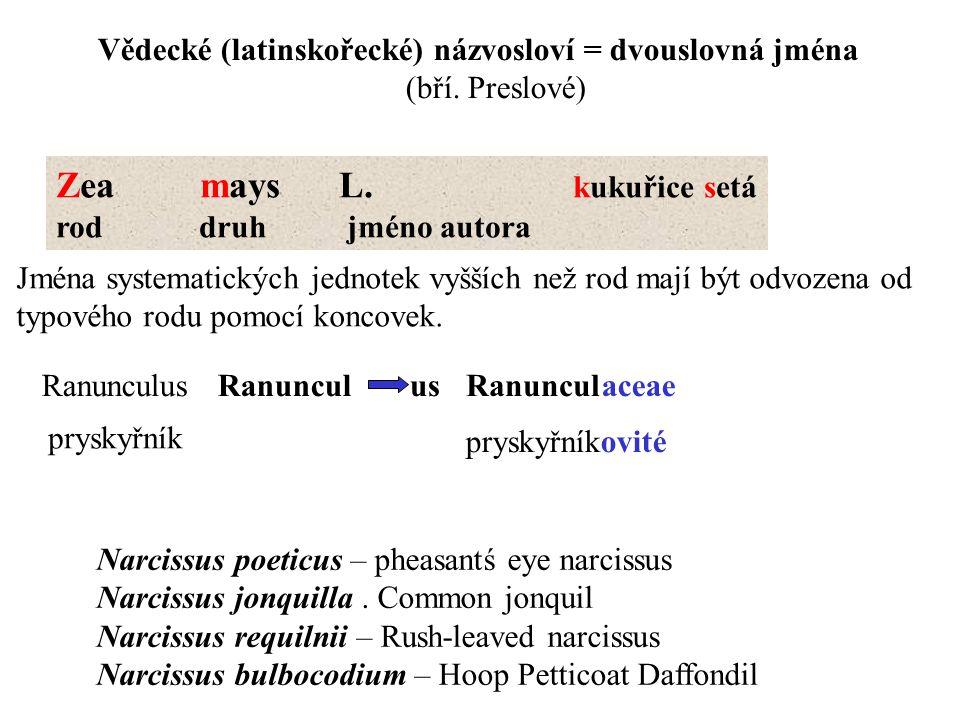 Vědecké (latinskořecké) názvosloví = dvouslovná jména (bří. Preslové) Zea mays L. kukuřice setá rod druh jméno autora Jména systematických jednotek vy