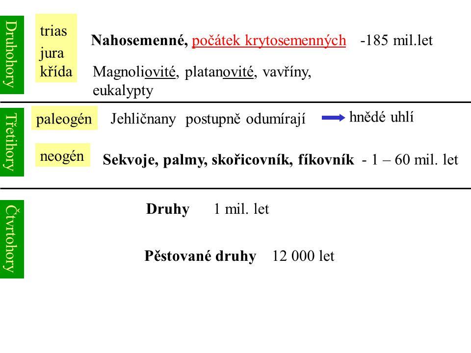 Druhohory trias jura křída Nahosemenné, počátek krytosemenných -185 mil.let Magnoliovité, platanovité, vavříny, eukalypty Třetihory paleogén neogén Je