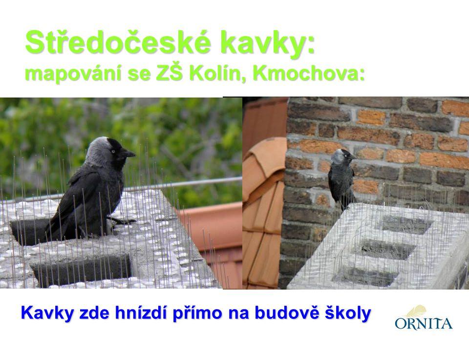 Kavky zde hnízdí přímo na budově školy Středočeské kavky: mapování se ZŠ Kolín, Kmochova: