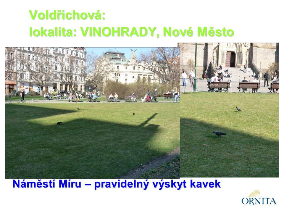 Náměstí Míru – pravidelný výskyt kavek Voldřichová: lokalita: VINOHRADY, Nové Město