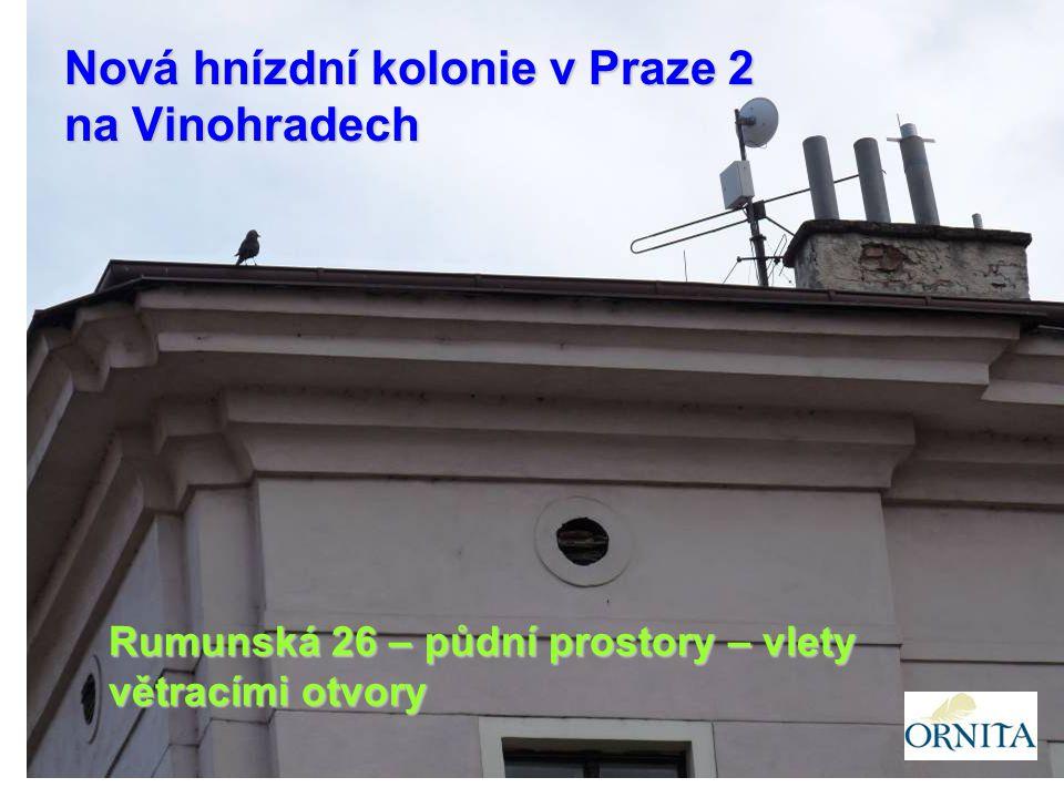 Rumunská 26 – půdní prostory – vlety větracími otvory Nová hnízdní kolonie v Praze 2 na Vinohradech