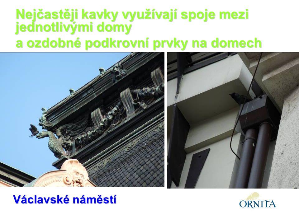 Václavské náměstí Nejčastěji kavky využívají spoje mezi jednotlivými domy a ozdobné podkrovní prvky na domech