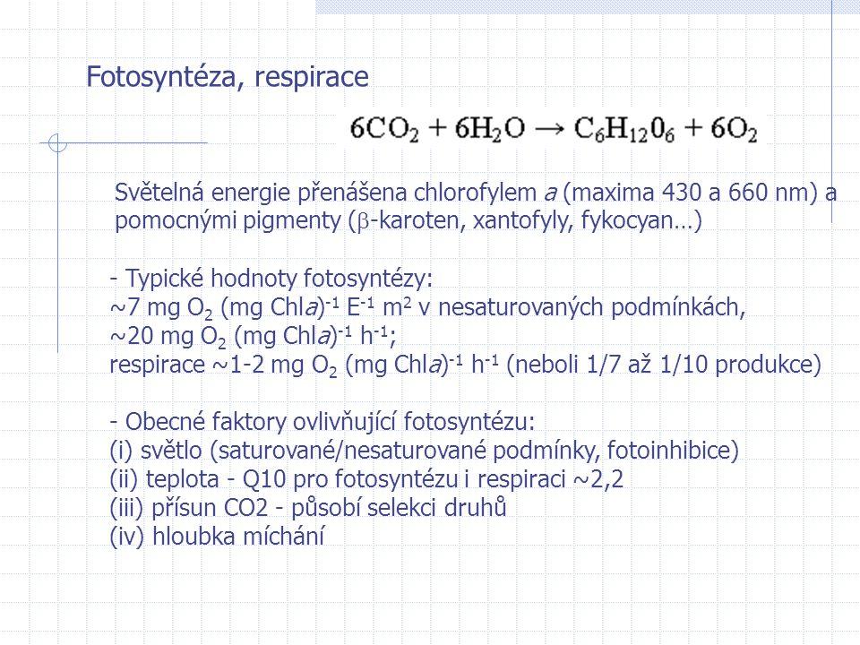 Fotosyntéza, respirace Světelná energie přenášena chlorofylem a (maxima 430 a 660 nm) a pomocnými pigmenty (  -karoten, xantofyly, fykocyan…) - Typic