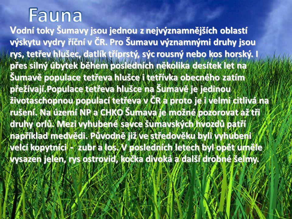 V odní toky Šumavy jsou jednou z nejvýznamnějších oblastí výskytu vydry říční v ČR. Pro Šumavu významnými druhy jsou rys, tetřev hlušec, datlík tříprs
