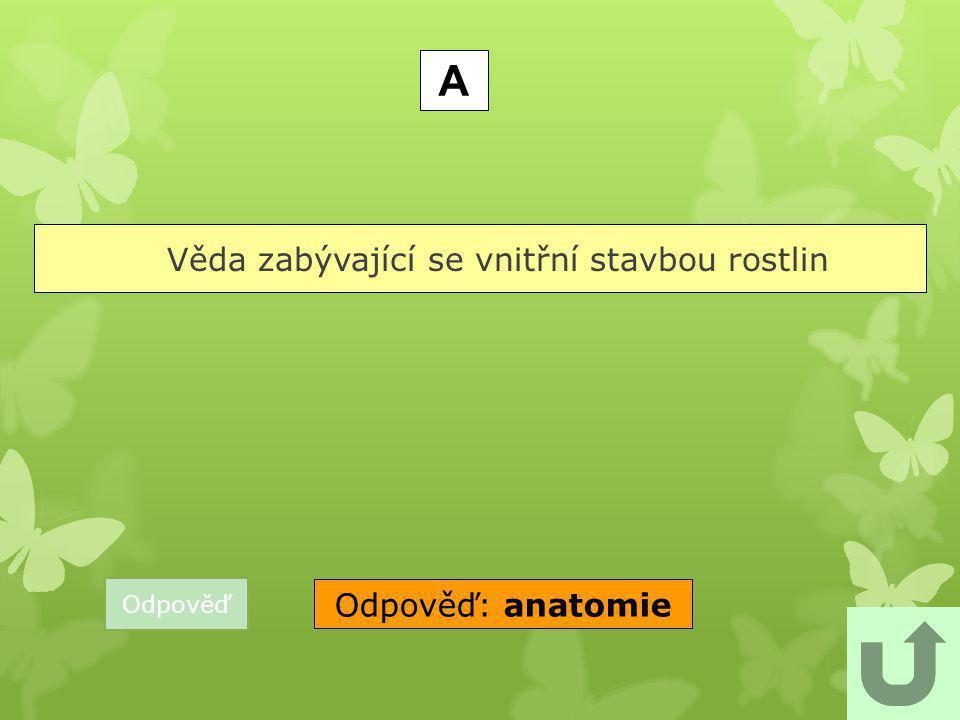 Odpověď Jehličnatý strom se vzpřímenými rozpadavými šiškami. J Odpověď: jedle bělokorá