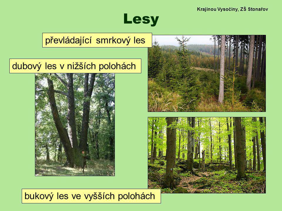 Krajinou Vysočiny, ZŠ Stonařov Lesy převládající smrkový les bukový les ve vyšších polohách dubový les v nižších polohách