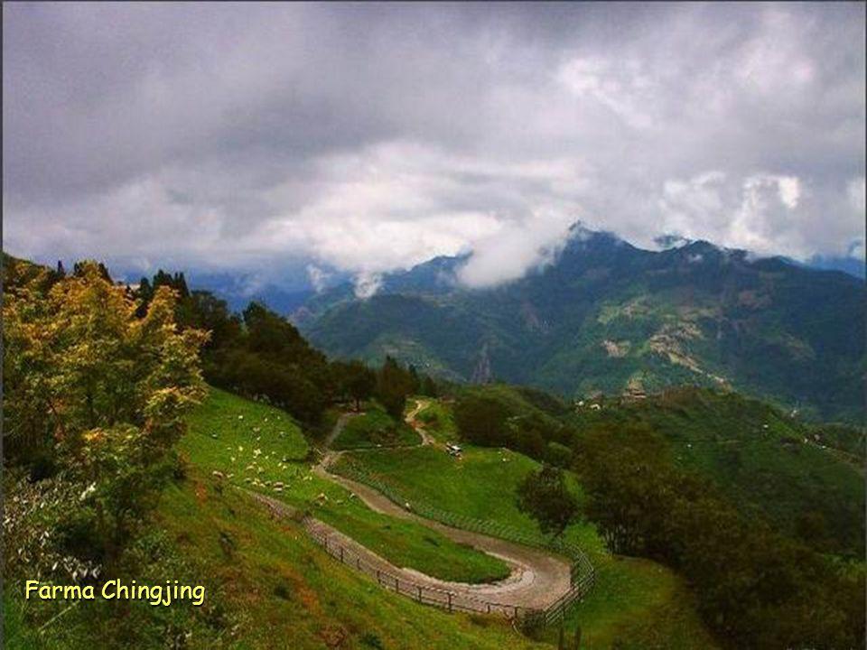Farma Chingjing ve výšce 1.750 m. nad mořem