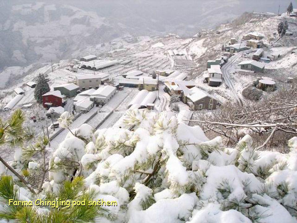 Farma Chingjing