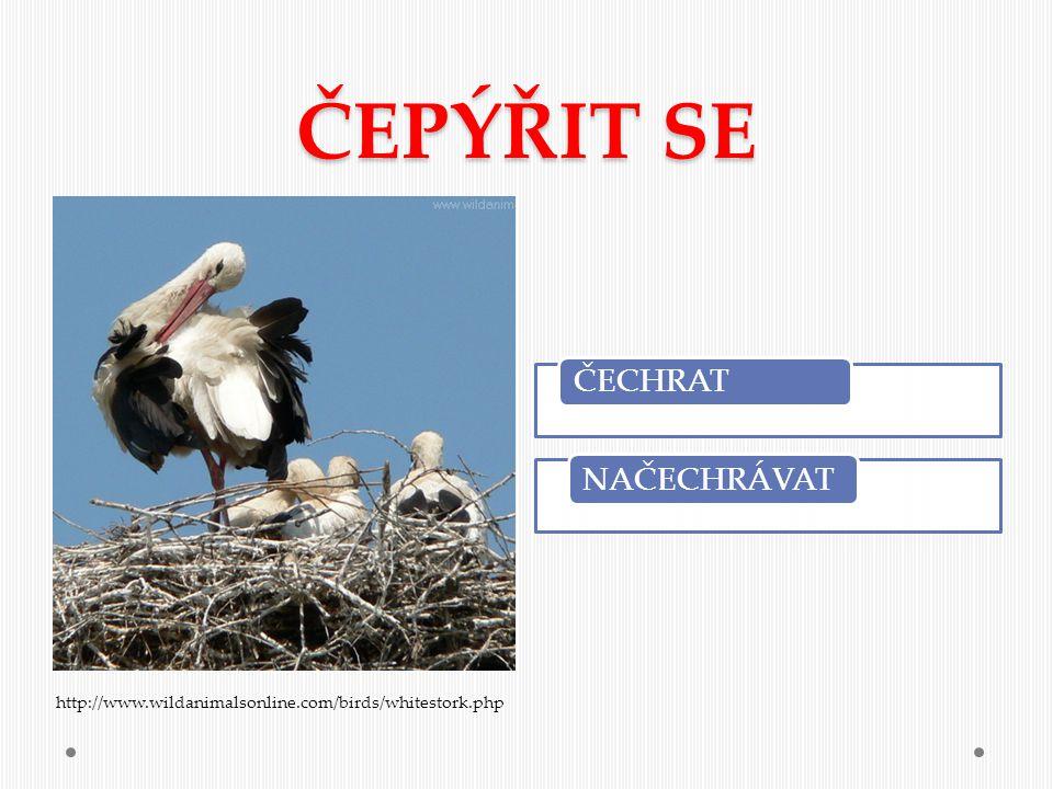 ČEPÝŘIT SE ČECHRAT NAČECHRÁVAT http://www.wildanimalsonline.com/birds/whitestork.php