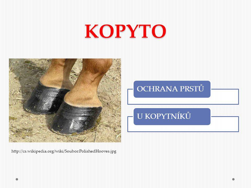 KOPYTO OCHRANA PRSTŮU KOPYTNÍKŮ http://cs.wikipedia.org/wiki/Soubor:PolishedHooves.jpg