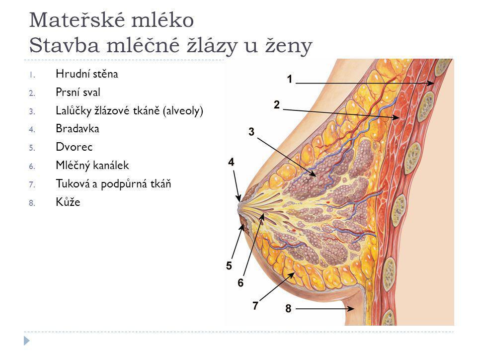 Mateřské mléko Stavba mléčné žlázy u ženy 1.Hrudní stěna 2.