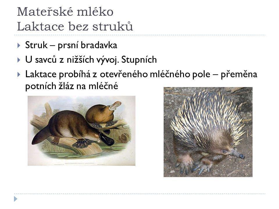 Mateřské mléko Laktace bez struků  Struk – prsní bradavka  U savců z nižších vývoj.