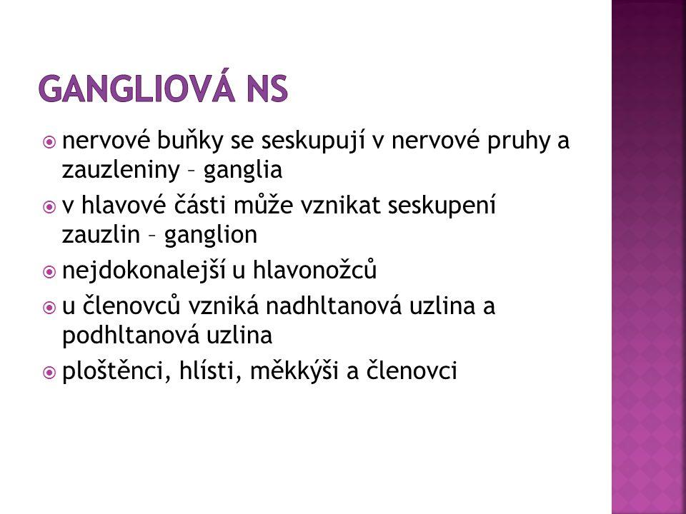  http://www.biologiecloveka.estranky.cz/clan ky/soustavy-cloveka/druhy-nervu.html http://www.biologiecloveka.estranky.cz/clan ky/soustavy-cloveka/druhy-nervu.html  http://bioweb.webshake.cz/10-nervova- soustava-zivocichu-a-cloveka/ http://bioweb.webshake.cz/10-nervova- soustava-zivocichu-a-cloveka/  http://absolventi.gymcheb.cz/2009/bakorel /ns.html http://absolventi.gymcheb.cz/2009/bakorel /ns.html  http://prirodopis8.ic.cz/nervova_soustava/N S_zivocichu.pdf http://prirodopis8.ic.cz/nervova_soustava/N S_zivocichu.pdf