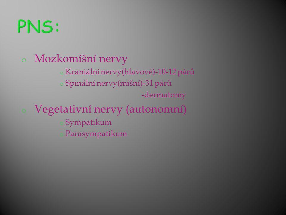 o Mozkomíšní nervy o Kraniální nervy(hlavové)-10-12 párů o Spinální nervy(míšní)-31 párů -dermatomy o Vegetativní nervy (autonomní) o Sympatikum o Par