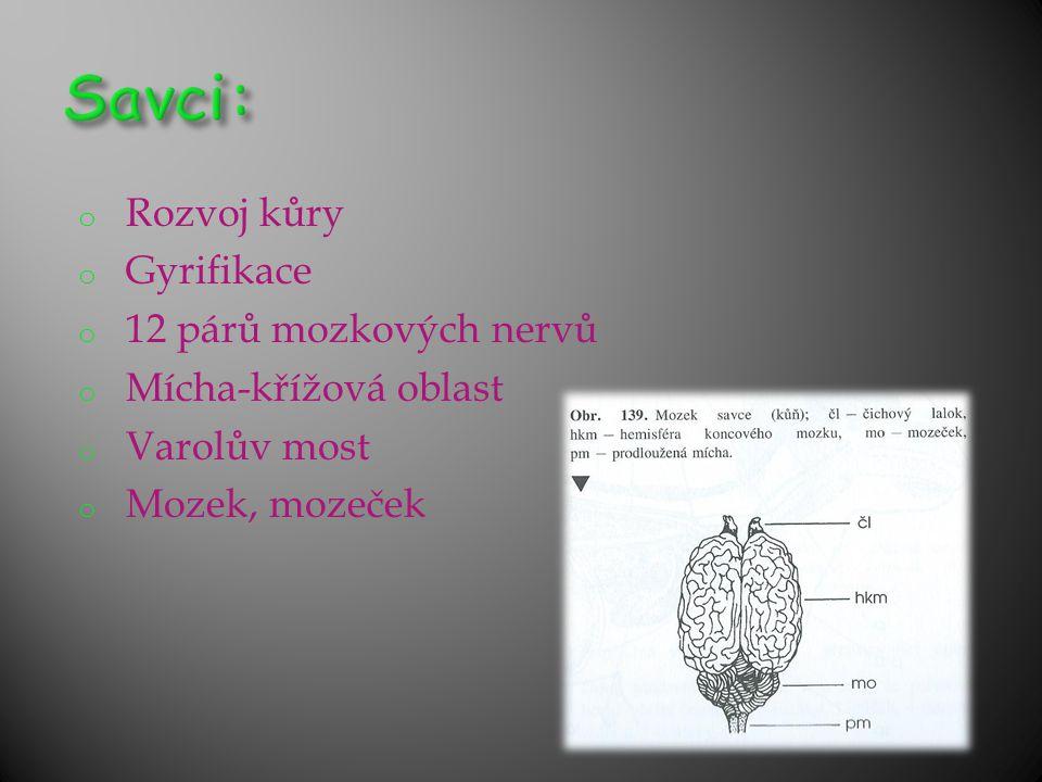 o Rozvoj kůry o Gyrifikace o 12 párů mozkových nervů o Mícha-křížová oblast o Varolův most o Mozek, mozeček