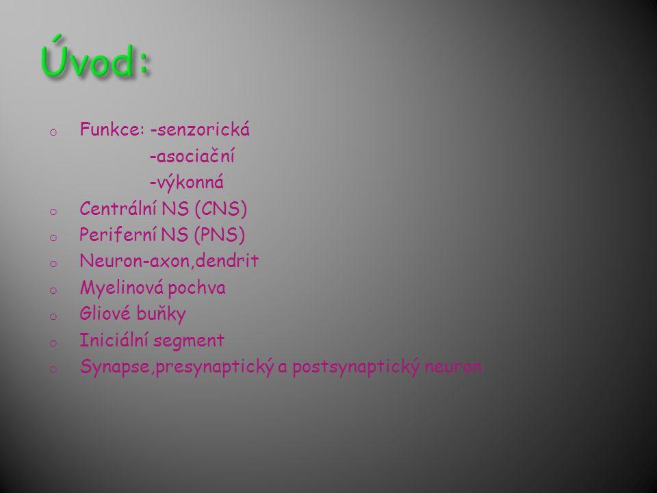 o Funkce: -senzorická -asociační -výkonná o Centrální NS (CNS) o Periferní NS (PNS) o Neuron-axon,dendrit o Myelinová pochva o Gliové buňky o Iniciáln