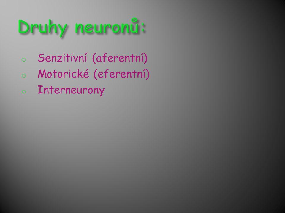 o Senzitivní (aferentní) o Motorické (eferentní) o Interneurony