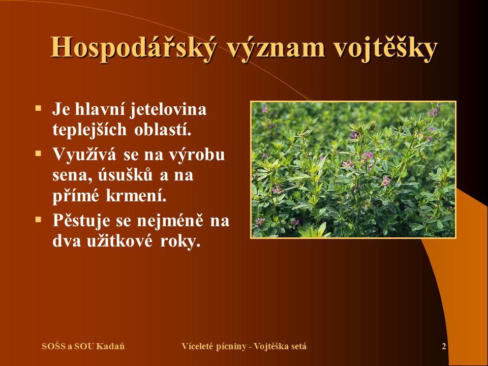 SOŠS a SOU KadaňVíceleté pícniny - Vojtěška setá3 Biologické vlastnosti vojtěšky  Je to vytrvalá rostlina.
