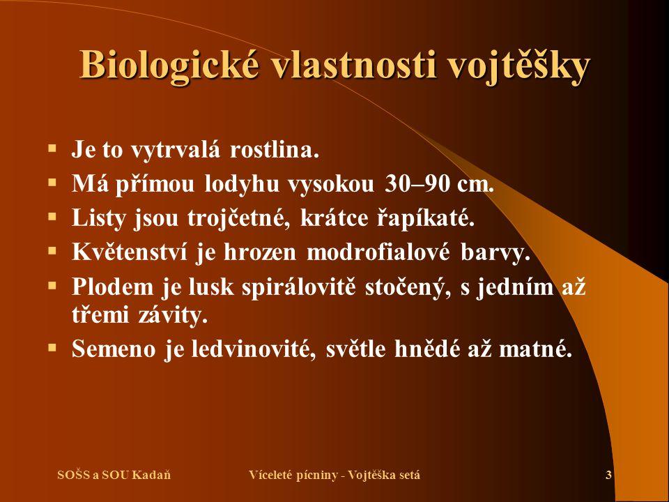 SOŠS a SOU KadaňVíceleté pícniny - Vojtěška setá4 Biologické vlastnosti vojtěšky