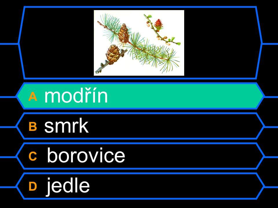 A modřín B smrk C borovice D jedle