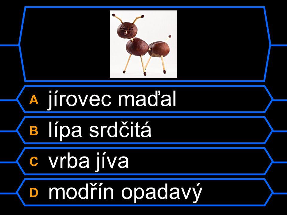 Otázka 13 Z kterého stromu pocházím?