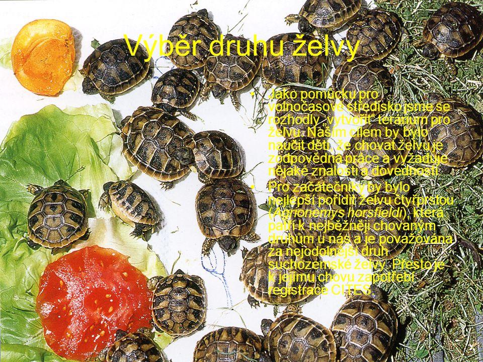 """Výběr druhu želvy Jako pomůcku pro volnočasové středisko jsme se rozhodly """"vytvořit"""" terárium pro želvu. Naším cílem by bylo naučit děti, že chovat že"""