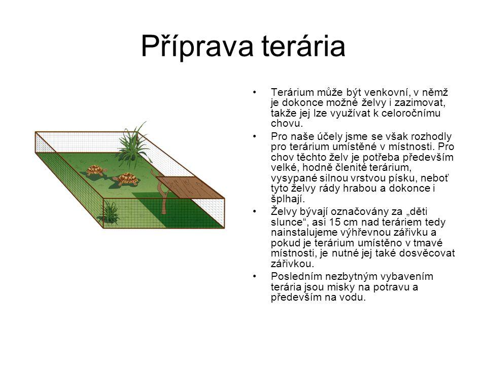 Příprava terária Terárium může být venkovní, v němž je dokonce možné želvy i zazimovat, takže jej lze využívat k celoročnímu chovu. Pro naše účely jsm