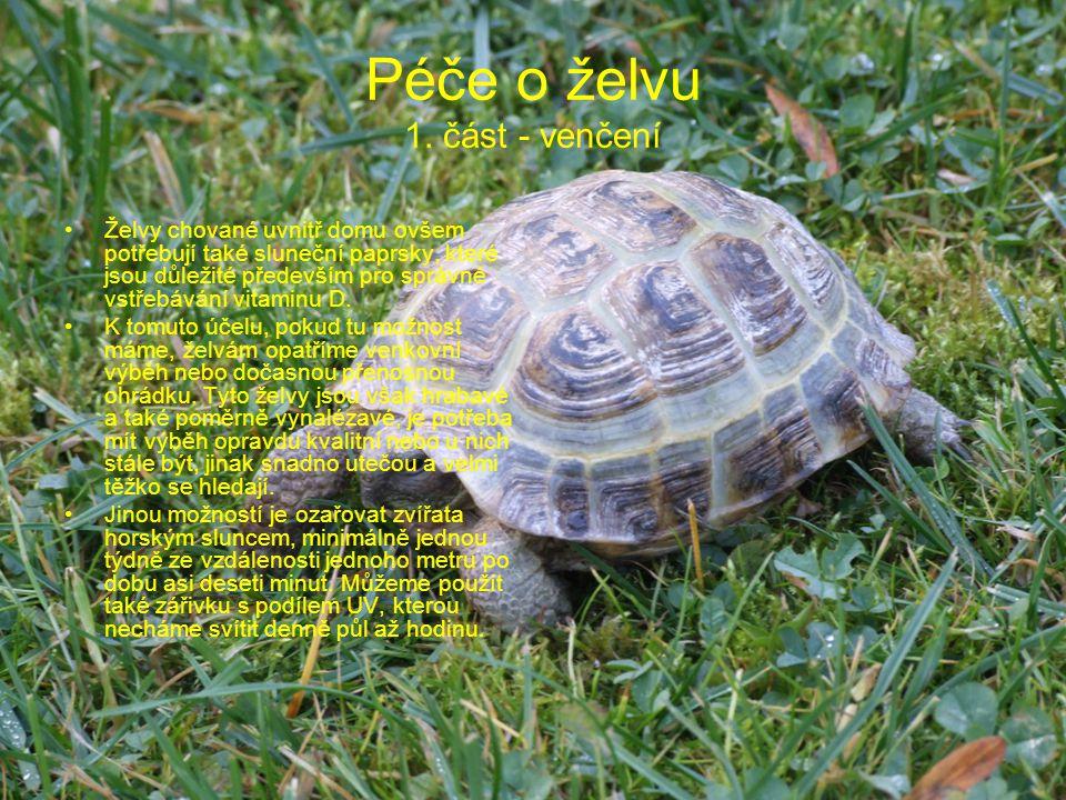 Péče o želvu 1. část - venčení Želvy chované uvnitř domu ovšem potřebují také sluneční paprsky, které jsou důležité především pro správné vstřebávání