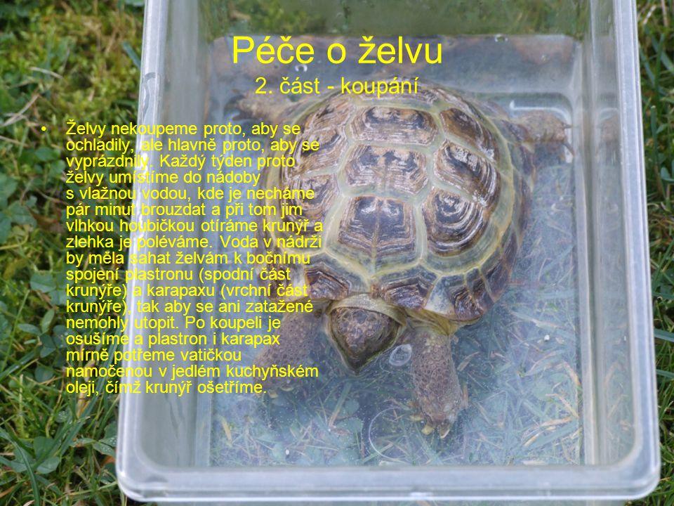Péče o želvu 2. část - koupání Želvy nekoupeme proto, aby se ochladily, ale hlavně proto, aby se vyprázdnily. Každý týden proto želvy umístíme do nádo