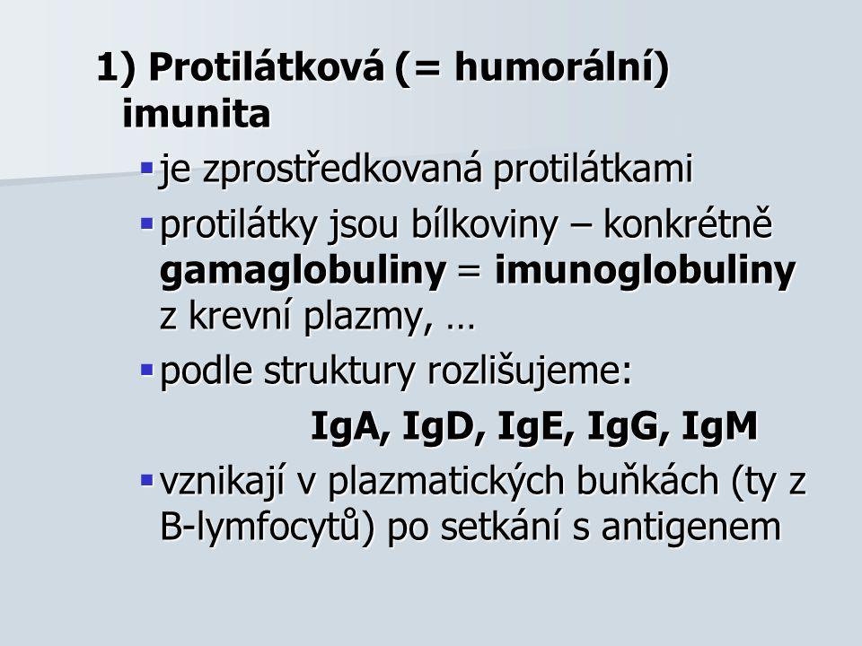 1) Protilátková (= humorální) imunita  je zprostředkovaná protilátkami  protilátky jsou bílkoviny – konkrétně gamaglobuliny = imunoglobuliny z krevn