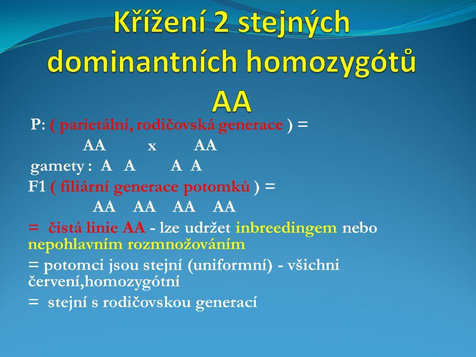 P: ( parietální, rodičovská generace ) = AA x AA gamety : A A A A F1 ( filiární generace potomků ) = AA AA AA AA = čistá linie AA - lze udržet inbreed