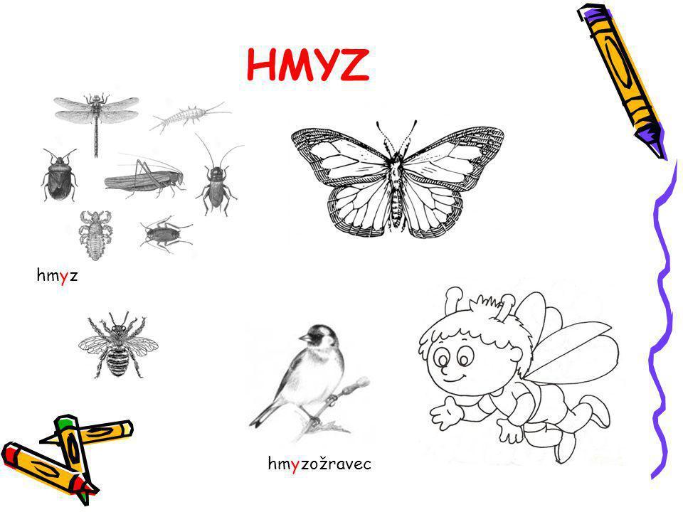 HMYZ hmyzožravec hmyz