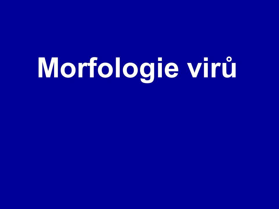 Morfologie virů