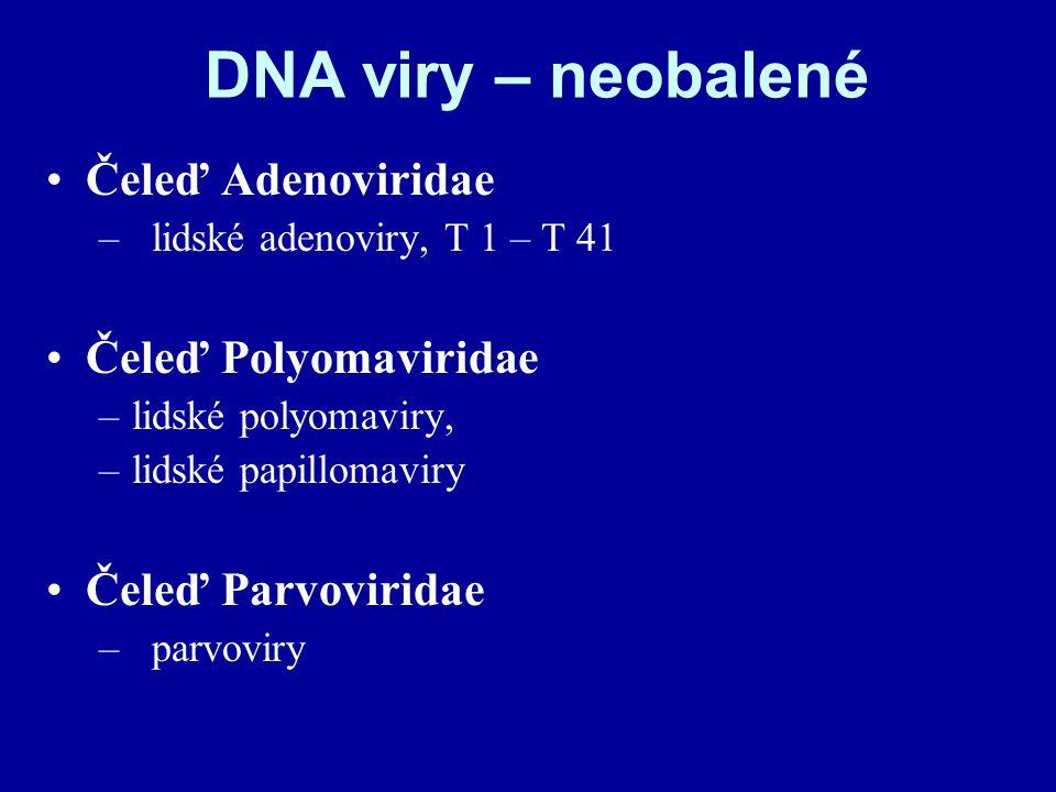 DNA viry – neobalené Čeleď Adenoviridae –lidské adenoviry, T 1 – T 41 Čeleď Polyomaviridae –lidské polyomaviry, –lidské papillomaviry Čeleď Parvoviridae –parvoviry