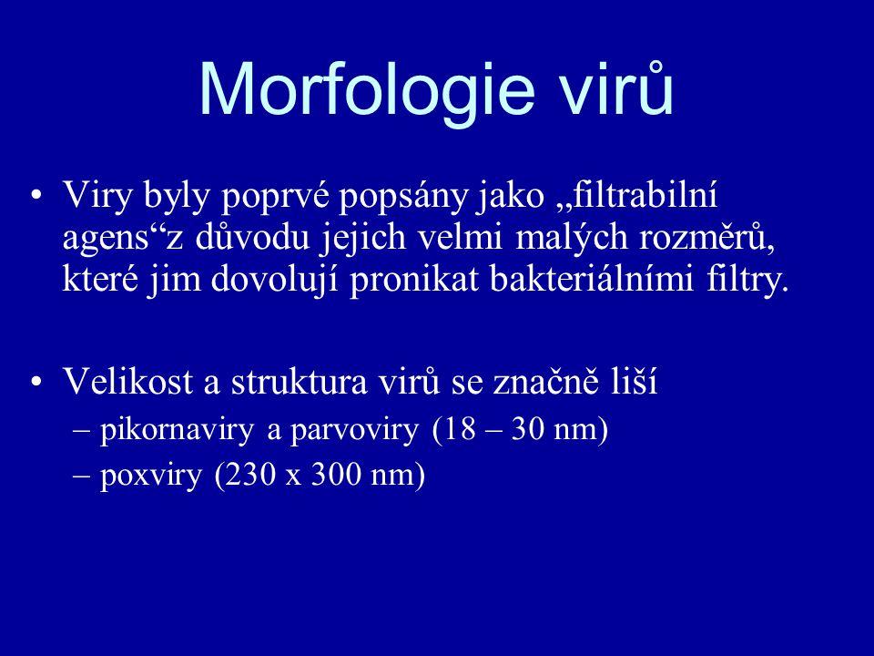 """Viry byly poprvé popsány jako """"filtrabilní agens z důvodu jejich velmi malých rozměrů, které jim dovolují pronikat bakteriálními filtry."""