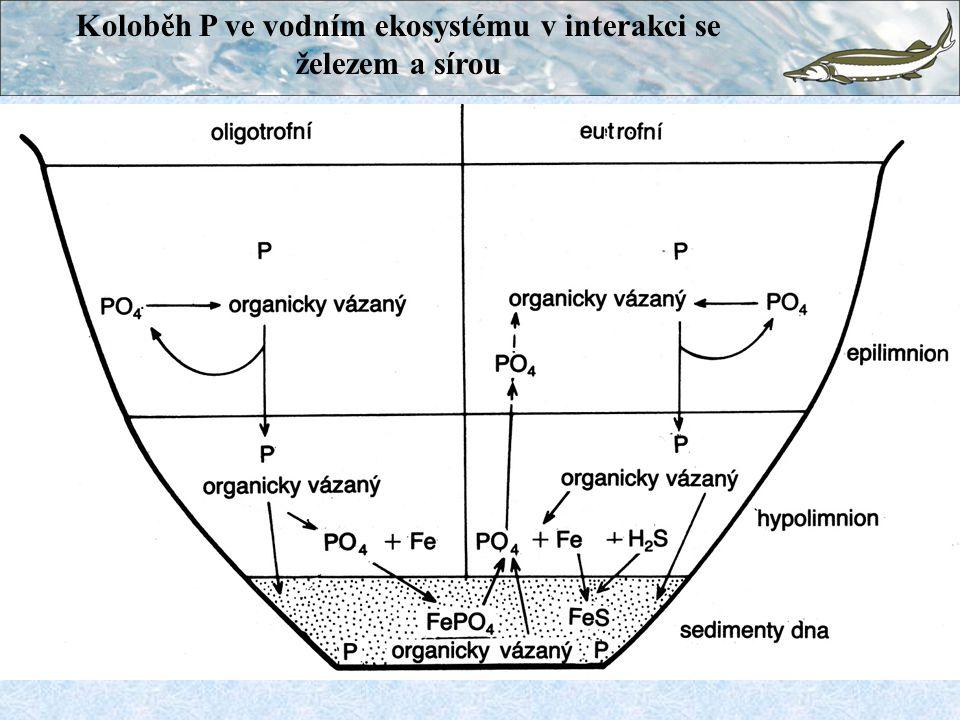 Koloběh P ve vodním ekosystému v interakci se železem a sírou